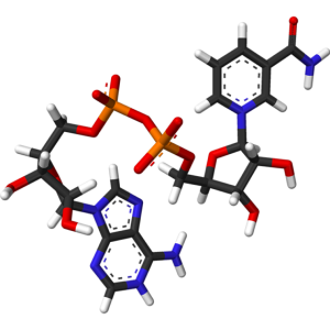https://healthcall.ae/wp-content/uploads/2020/07/NAD-3d-Structure-570x570-1-300x300.png